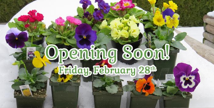 The Greenery Opens February 28