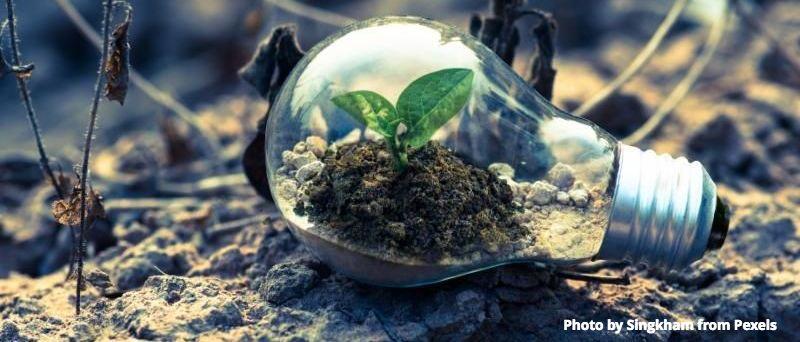 Growing ideas_Singkham