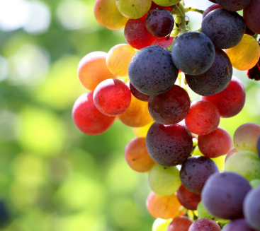 Grape Fruit Wine