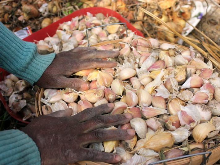 garlic people poc black vegetable