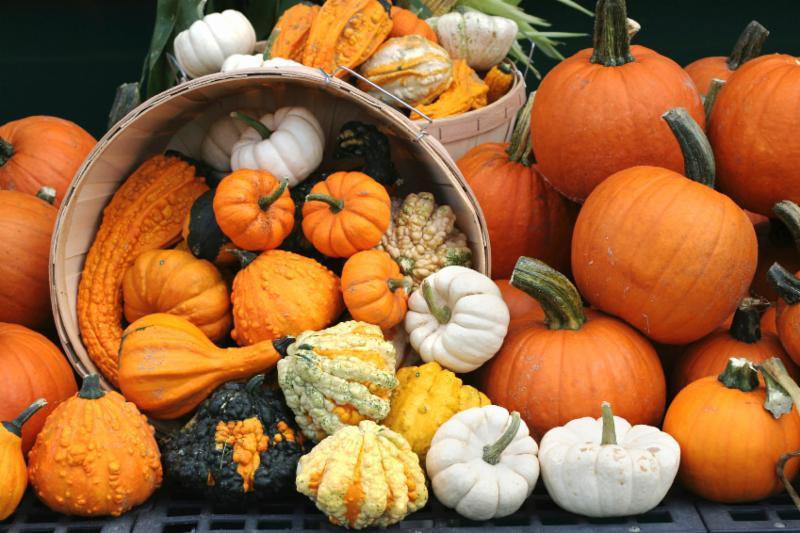 Gourds Pumpkins Winter Squash Autumn Fall