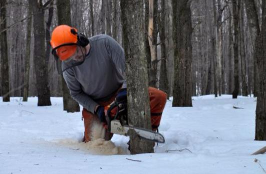 woodlot, tree, chainsaw, forestry
