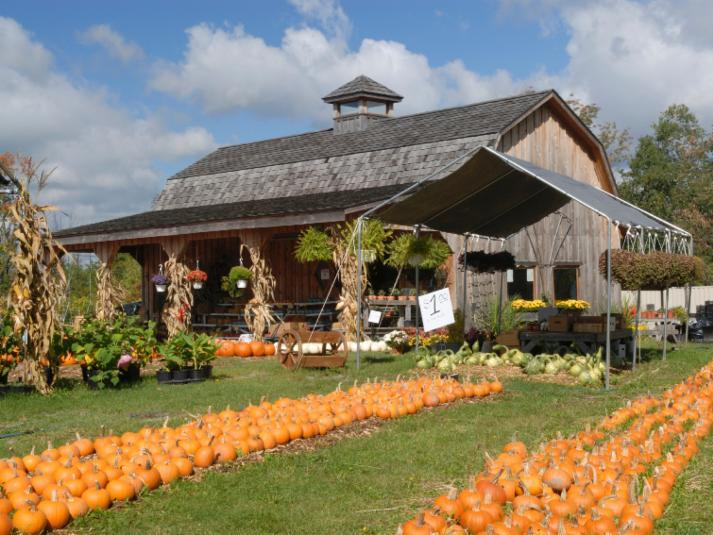 Farm Stand Pumpkins Marketing