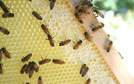 bee honey honeybee comb