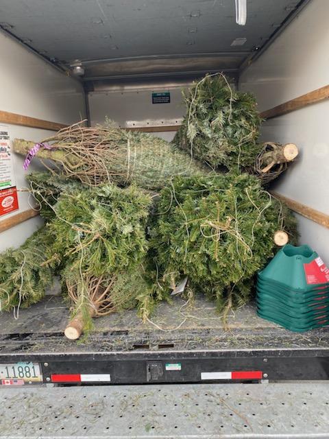 truck full of christmas trees