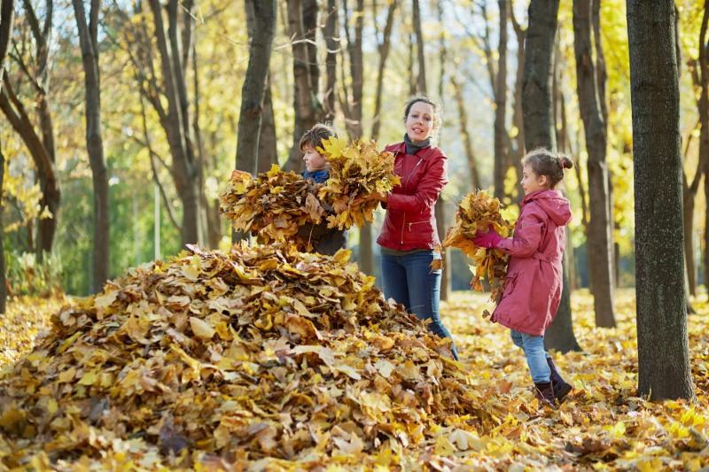 fall leaves pile