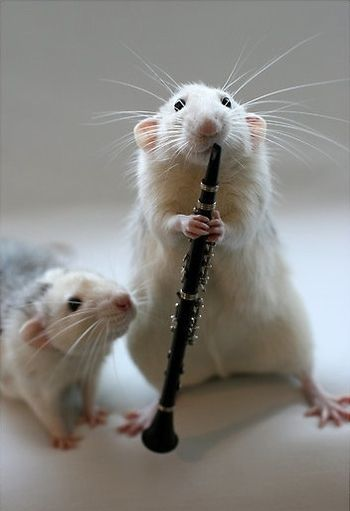 clarinet rat