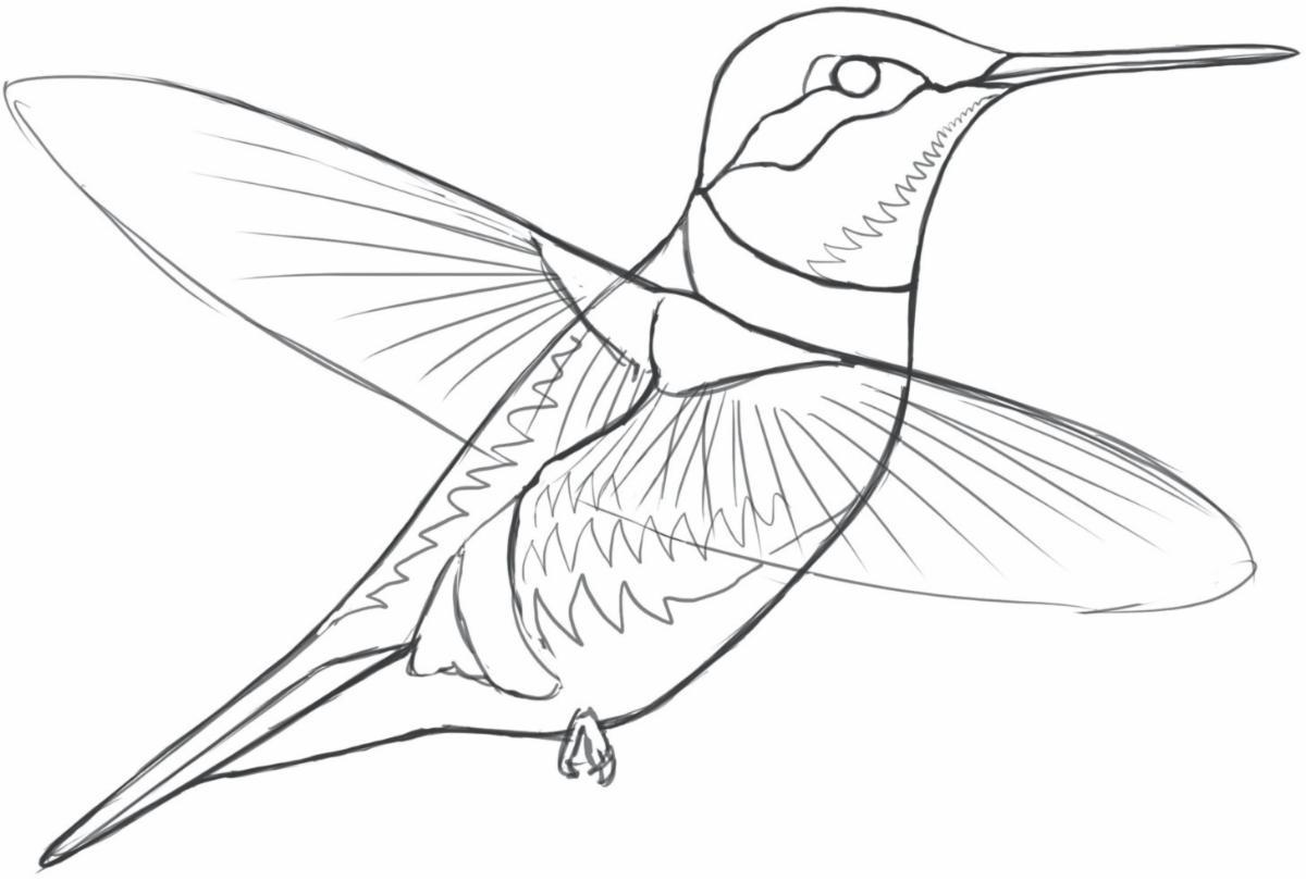 sibley_Audubon_ruby-throated_hummingbird_sketch