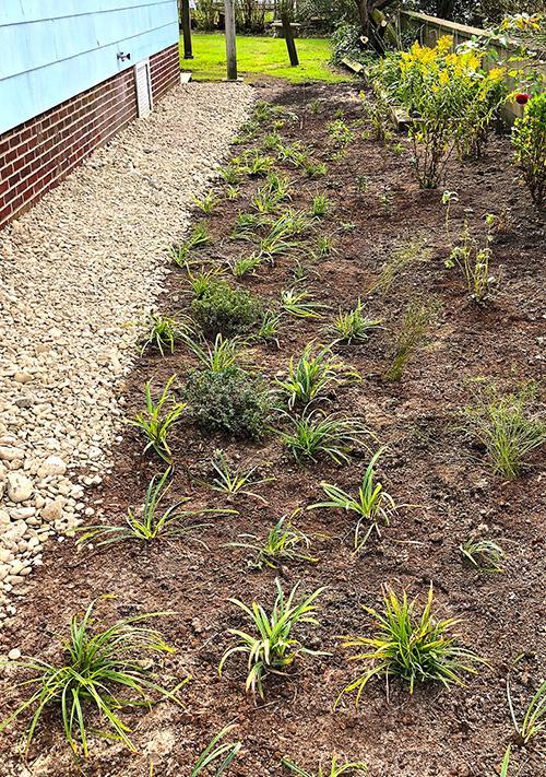 native_plant_garden
