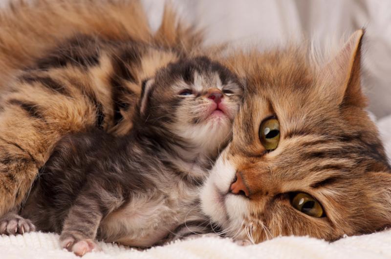 cat_and_newborn_kitten.jpg