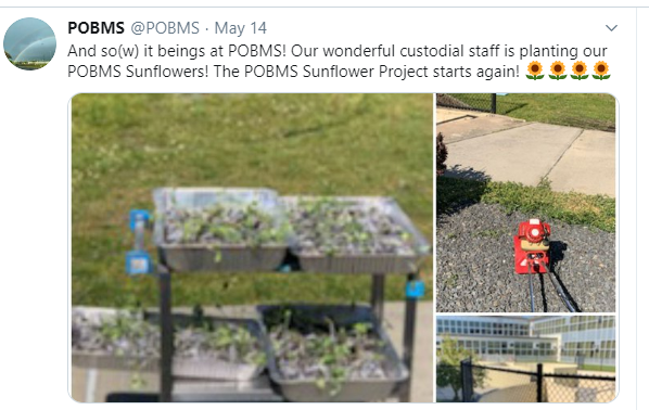 Sunflower seeds being planted by custodial staff due to building closures