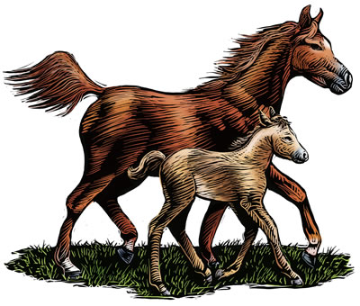 mare-foal-illustration.jpg