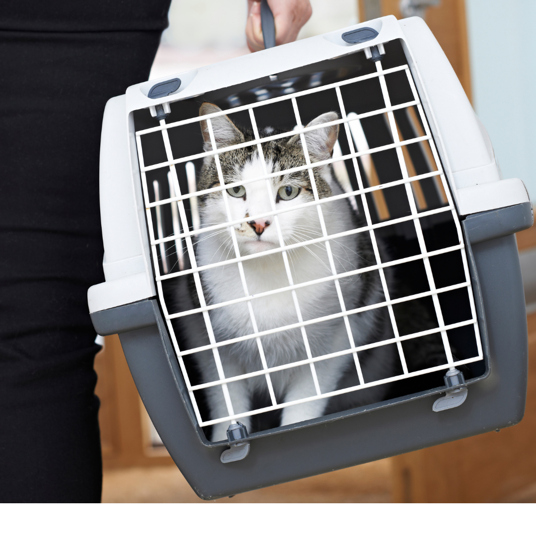 cat carrier.png