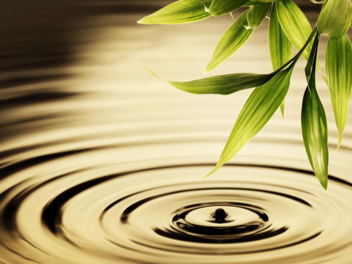 Water Droplet Bamboo.jpg
