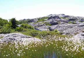 Photo of Mt. Monadnock by monadnocktrails.com