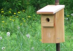 Photo of a bluebird box by Katrina Farmer