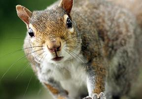 Photo of squirrel courtesy PBS