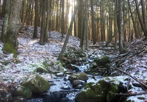 Photo of winter woods by Stacy Cibula