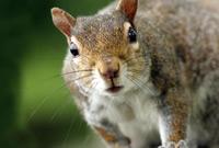 Photo of a squirrel courtesy PBS