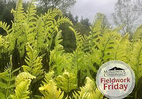 Photo of ferns by Shauna Sousa