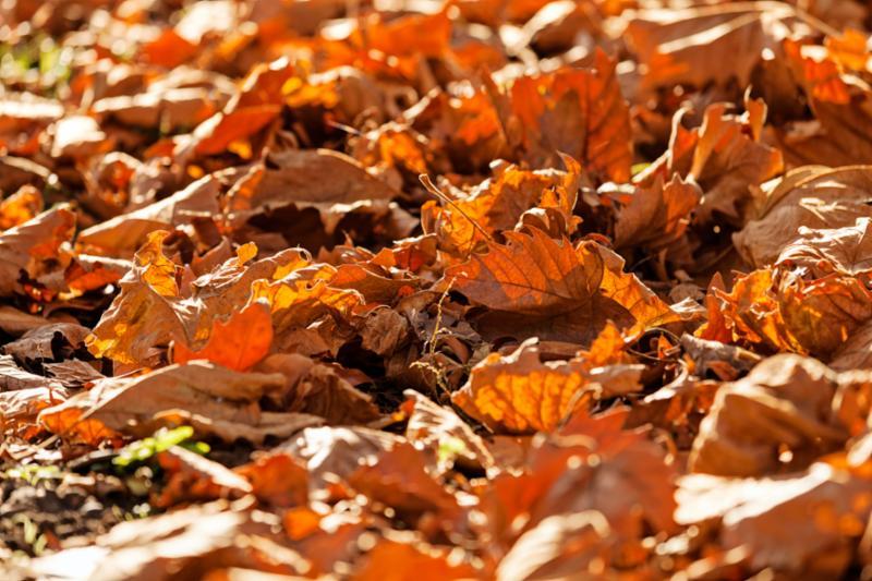 leaves_on_ground.jpg