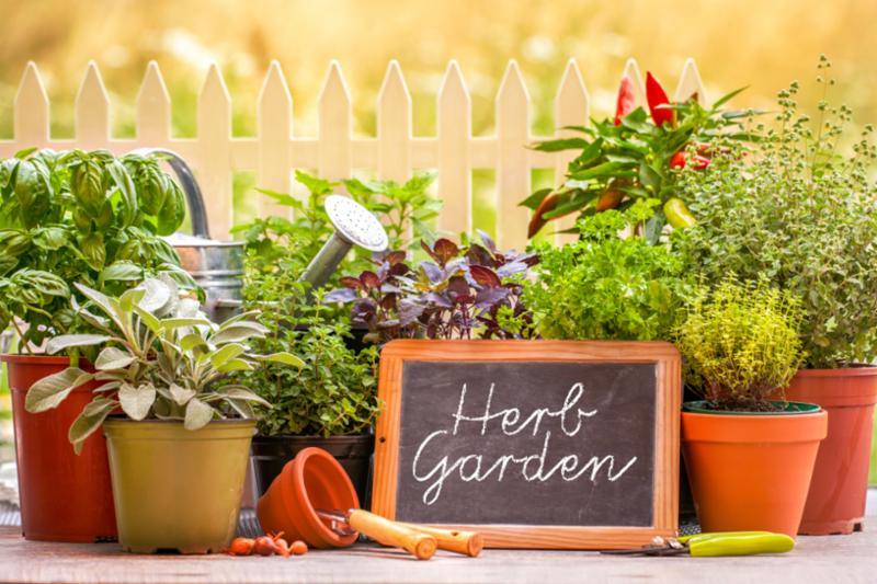 herb_garden.jpg