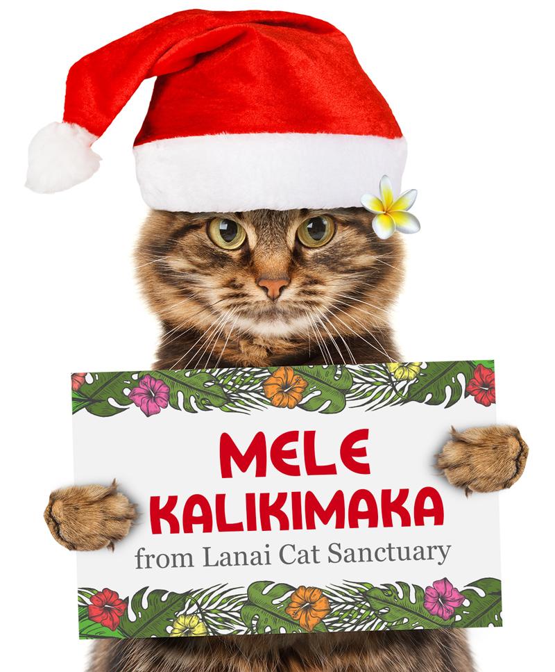 Cat holding sign with Mele Kalikimaka on it