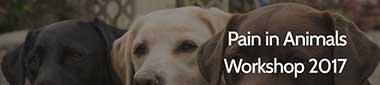 Pain in Animals Workshop 2017 image
