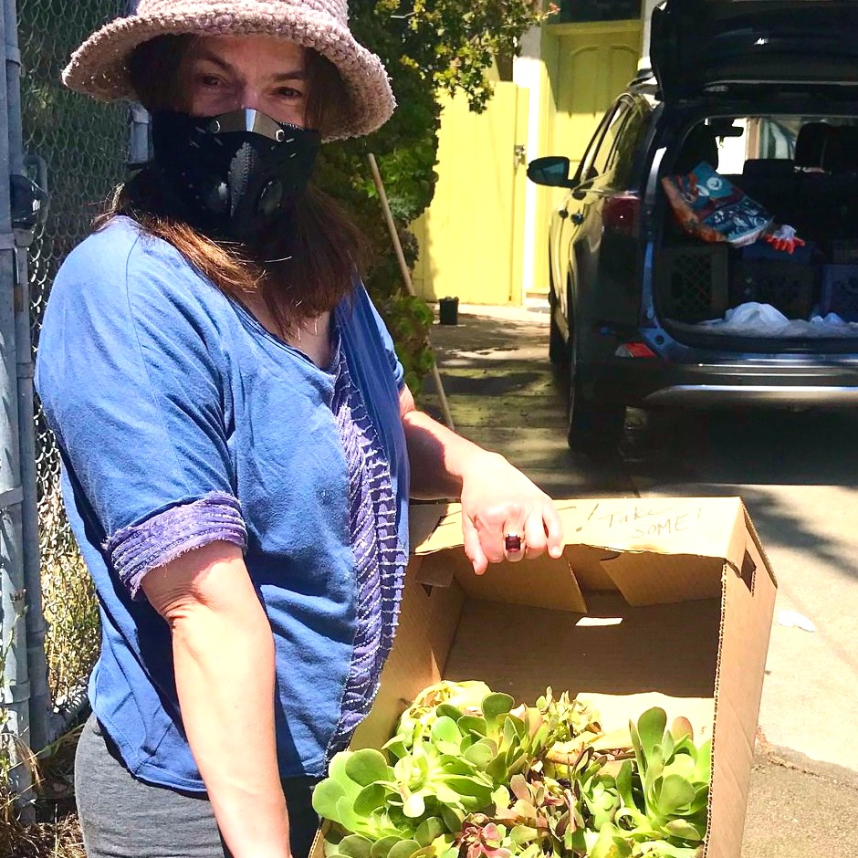 woman gardening with a box of succulents