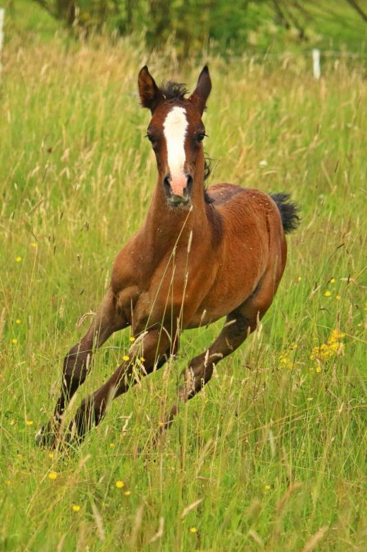 Are you ready for your horse's Fall deworming?