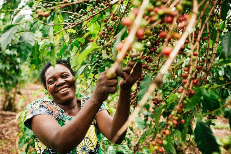 Woman holding branches of coffee berries