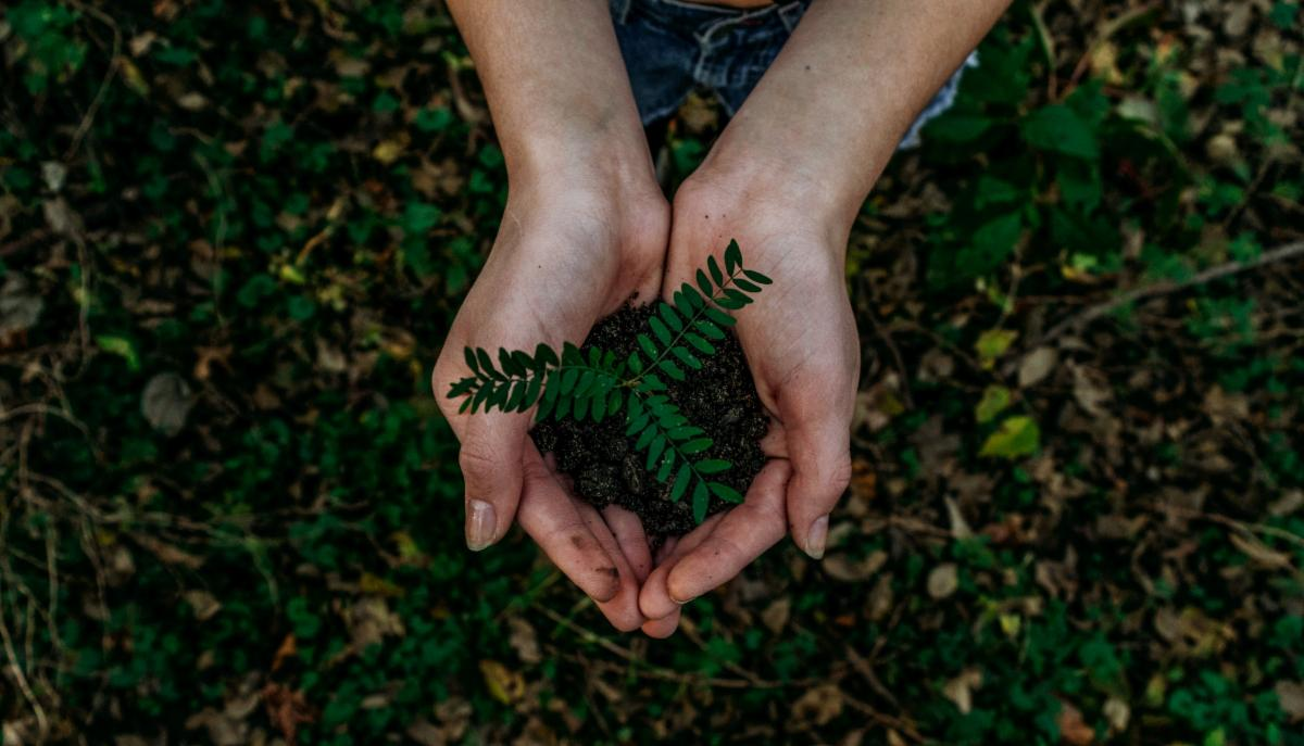 Hands holding a baby fern planted in a clump of soil
