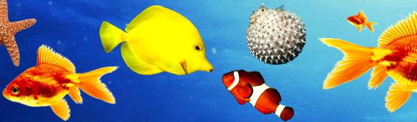colorful-fish.jpg