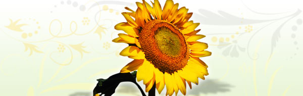 sunflower-design-header.jpg