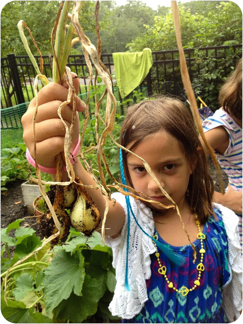 Onions Gardening