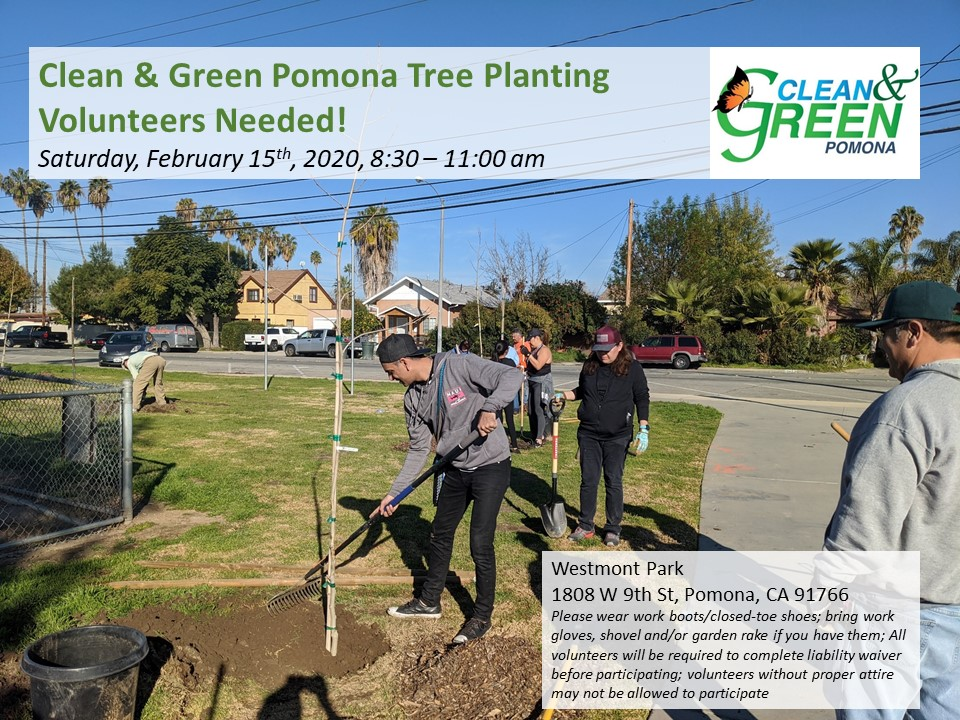 call for volunteers for pomona tree planting