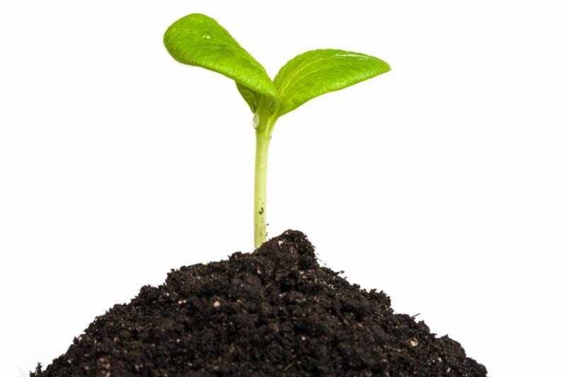 seedling_sprout.jpg