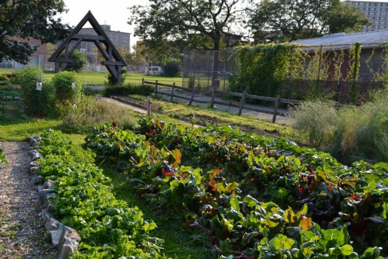 Community garden with rows of plants