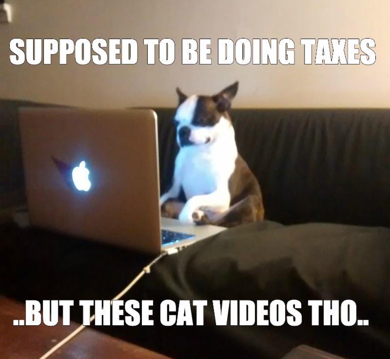 Dog taxes