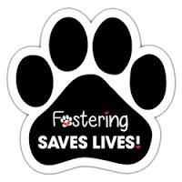 Fostering Save Lives