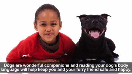 Dog Body Language video