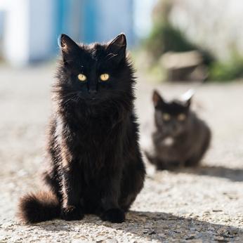 feral cats cat