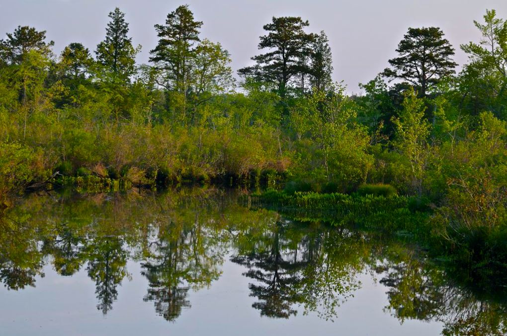 The Great Egg Harbor is shown with a shoreline of trees and shrubs. The vegetation glimmers as a reflection on the still river.