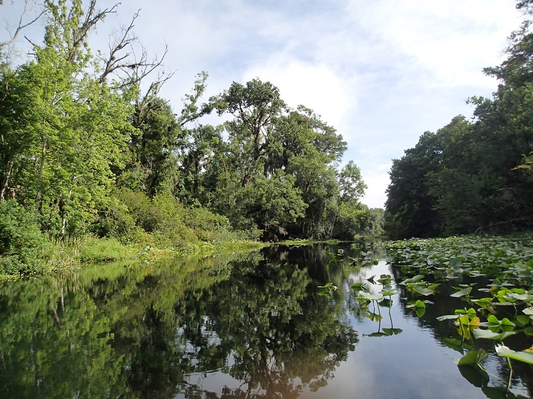 The Wekiva is river mirrors the trees in the back and lilypads sit atop the river. The sky is partly cloudy.