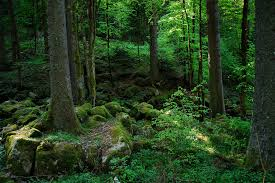forest3
