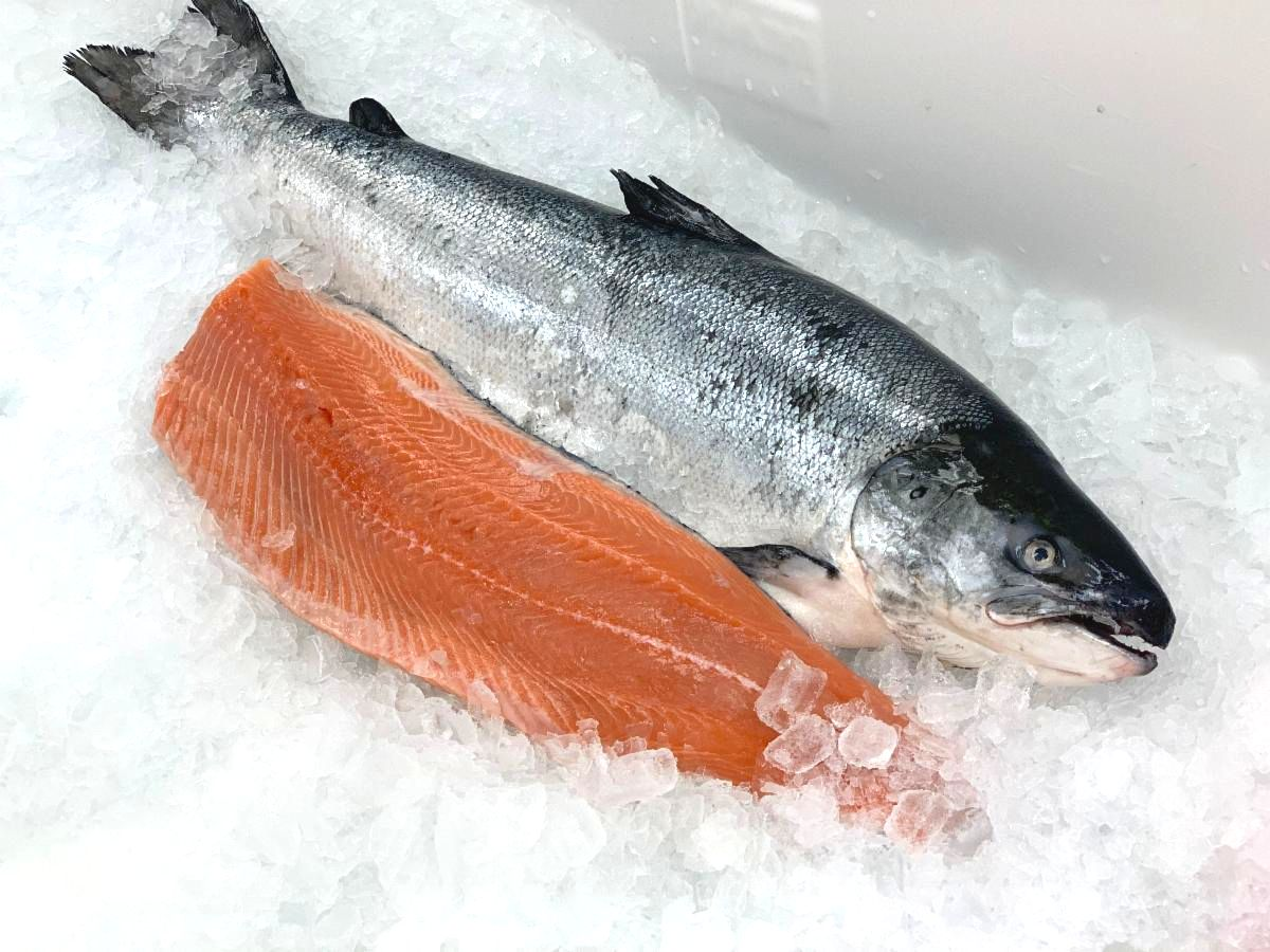 Kvaroy Arctic Salmon _13_.JPG