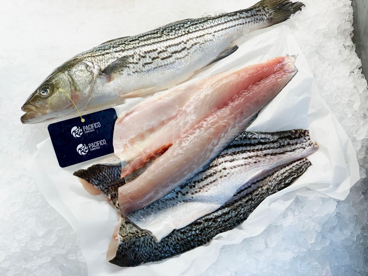 Pacifico_ Whole and Fillet _14_.jpg