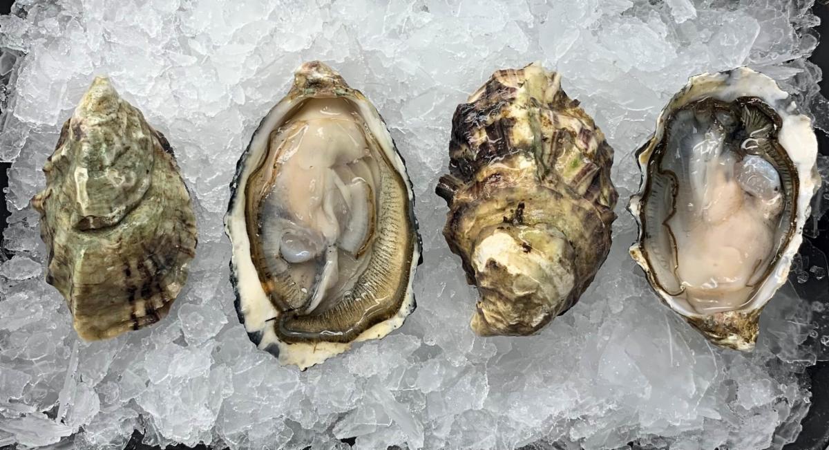 Chef Creek Oysters 1.jpg