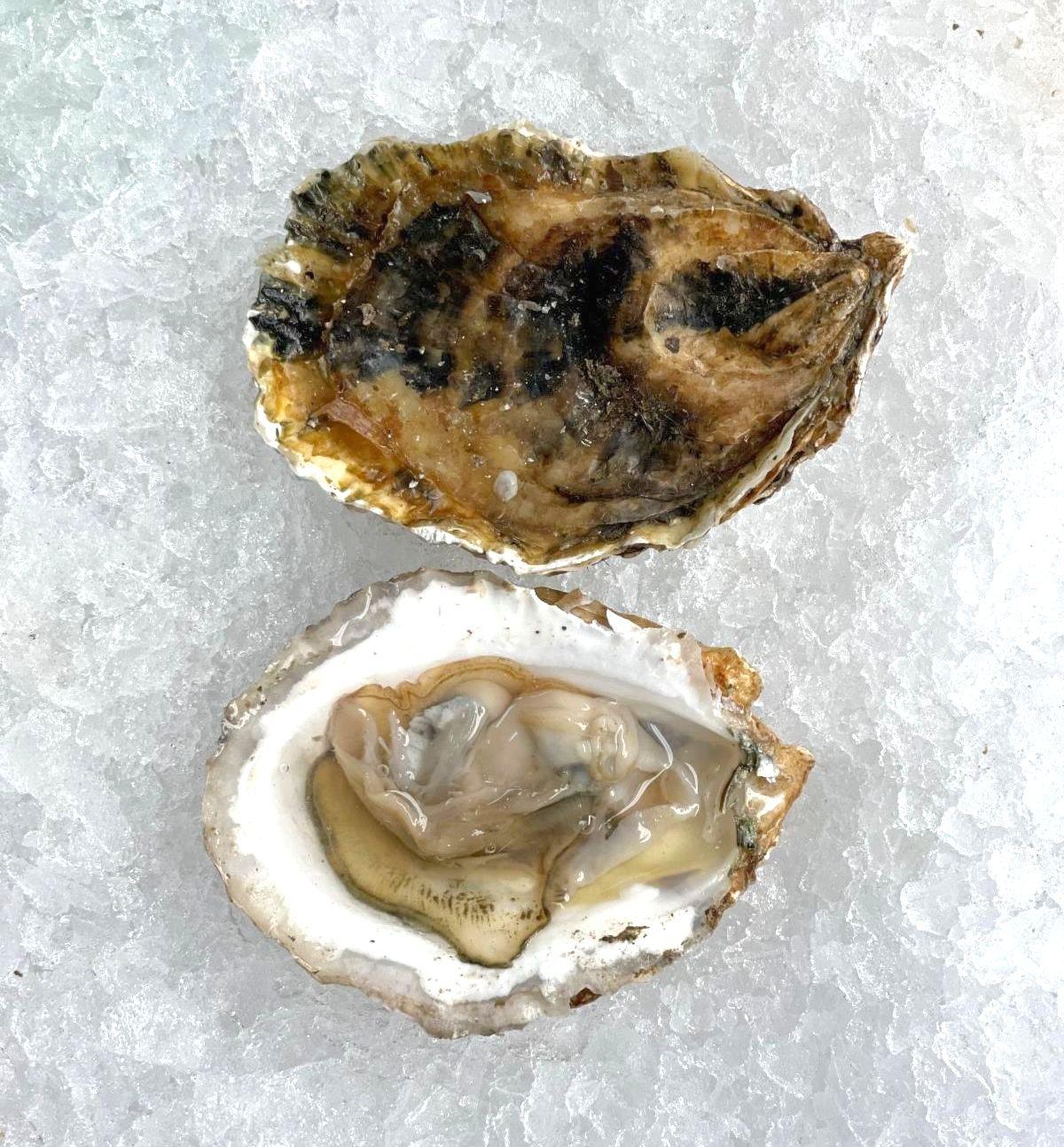 Malpeque Oyster.jpg