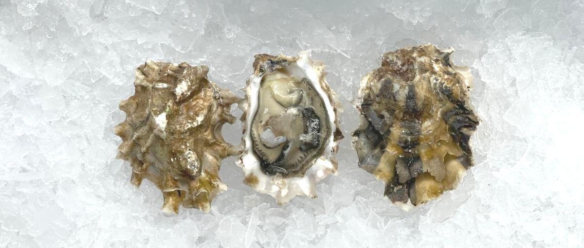 Big Cove Oysters _2_.JPG